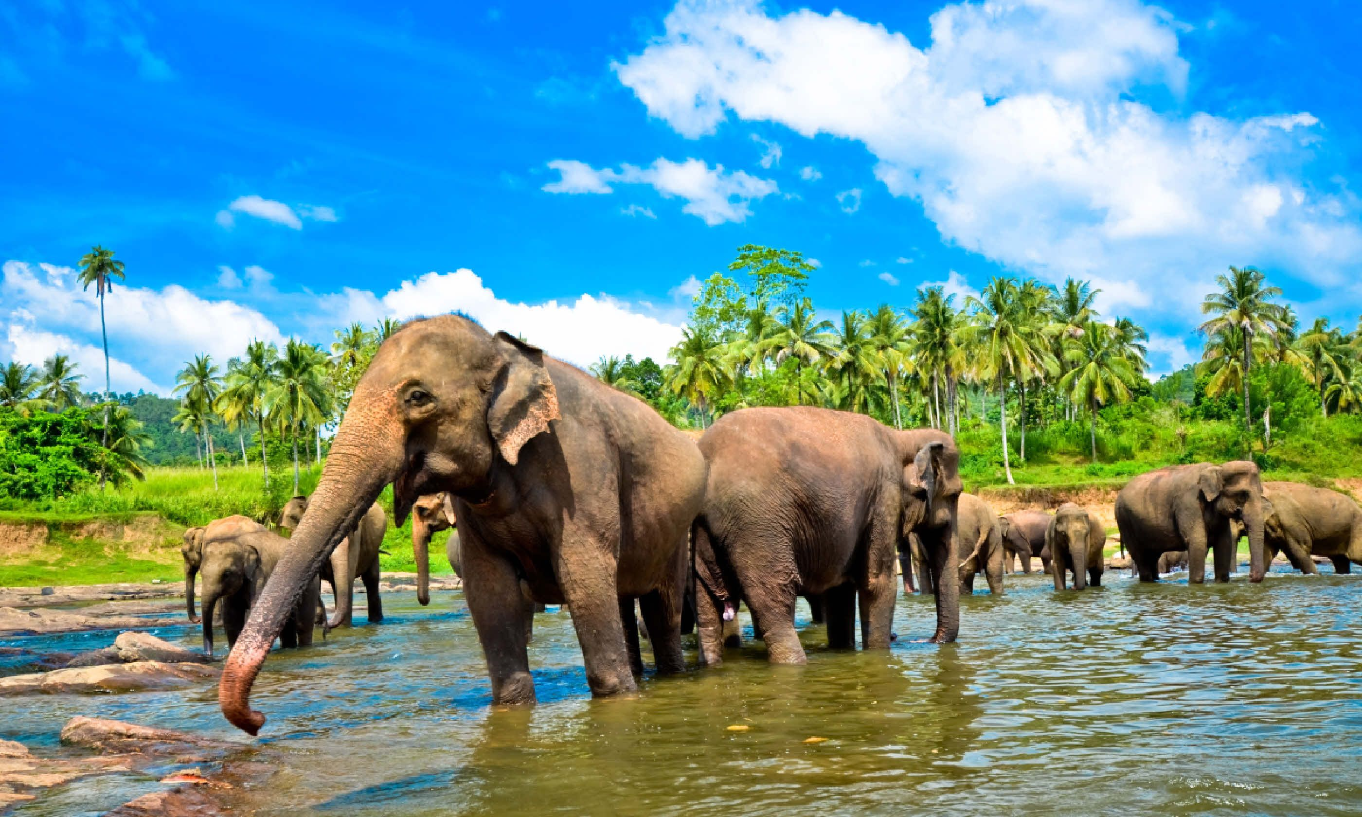 Elephant group in a river (Shutterstock)