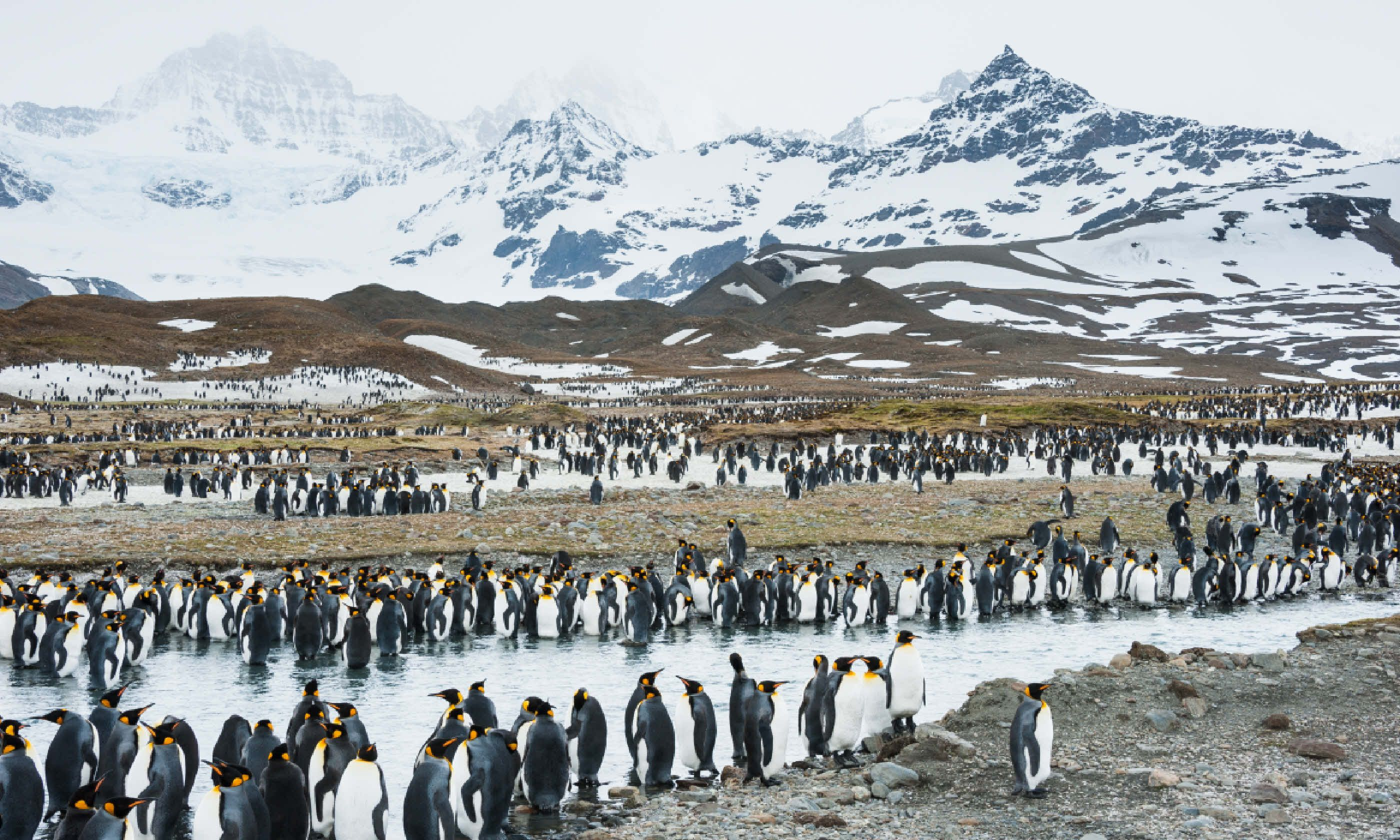 Penguins in South Georgia (Shutterstock)