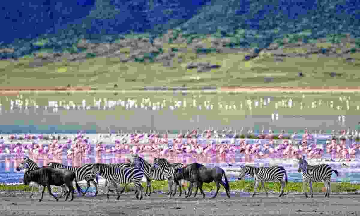 Ngorongoro Crater (Shutterstock)