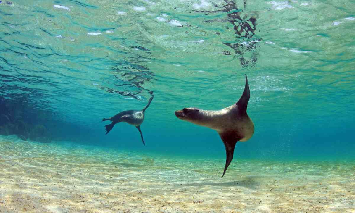 Galapagos Islands (Shutterstock)
