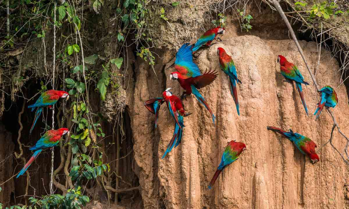 Macaws in the Amazon (Shutterstock)