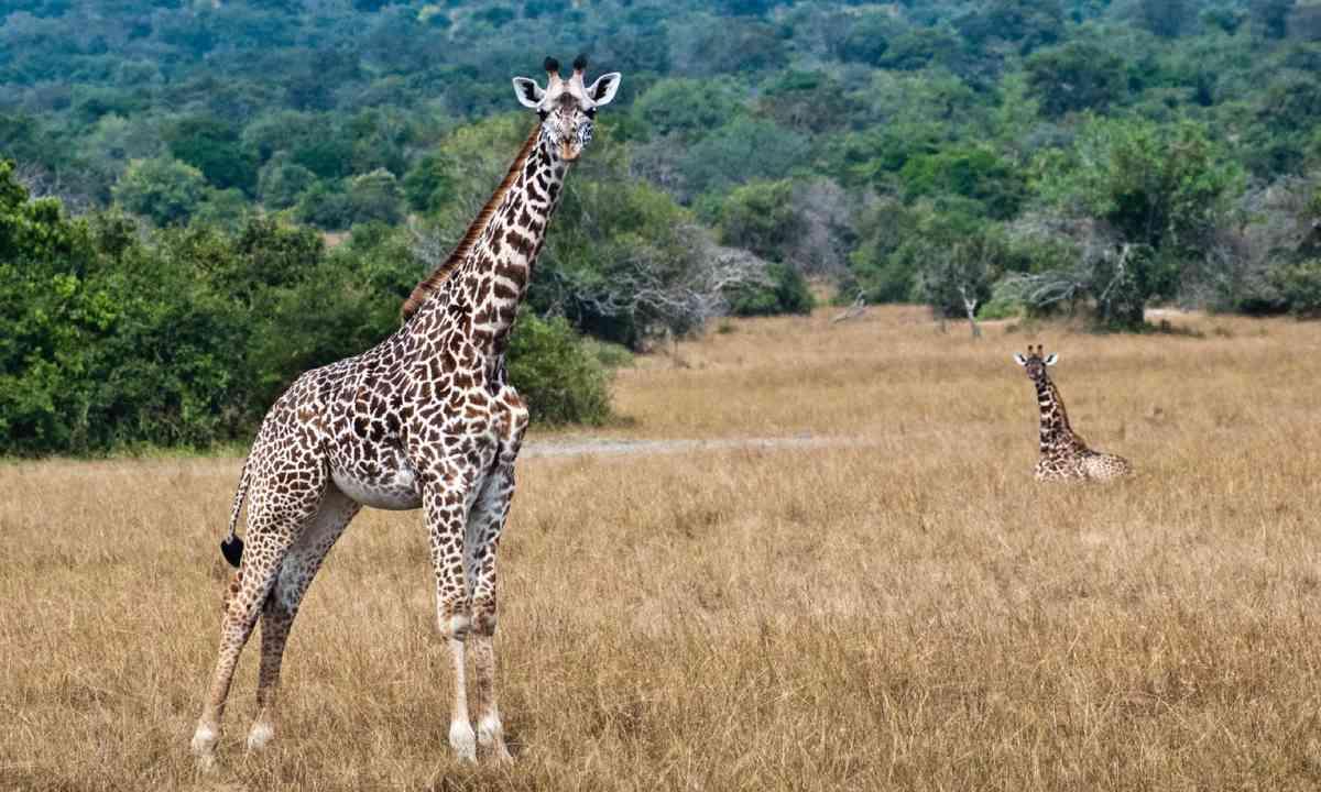 Akagera National Park (Shutterstock)
