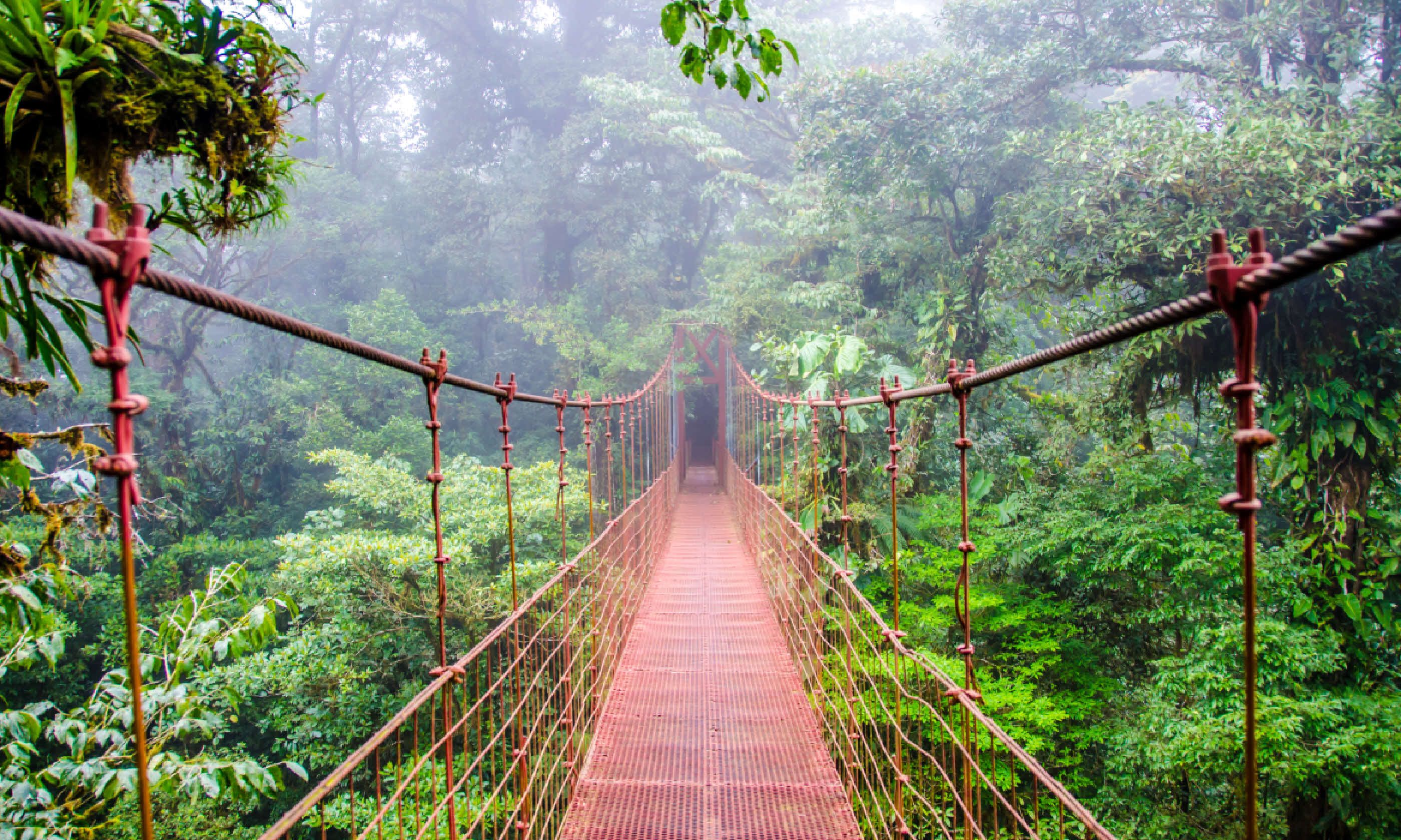 Bridge in rainforest, Costa Rica (Shutterstock)