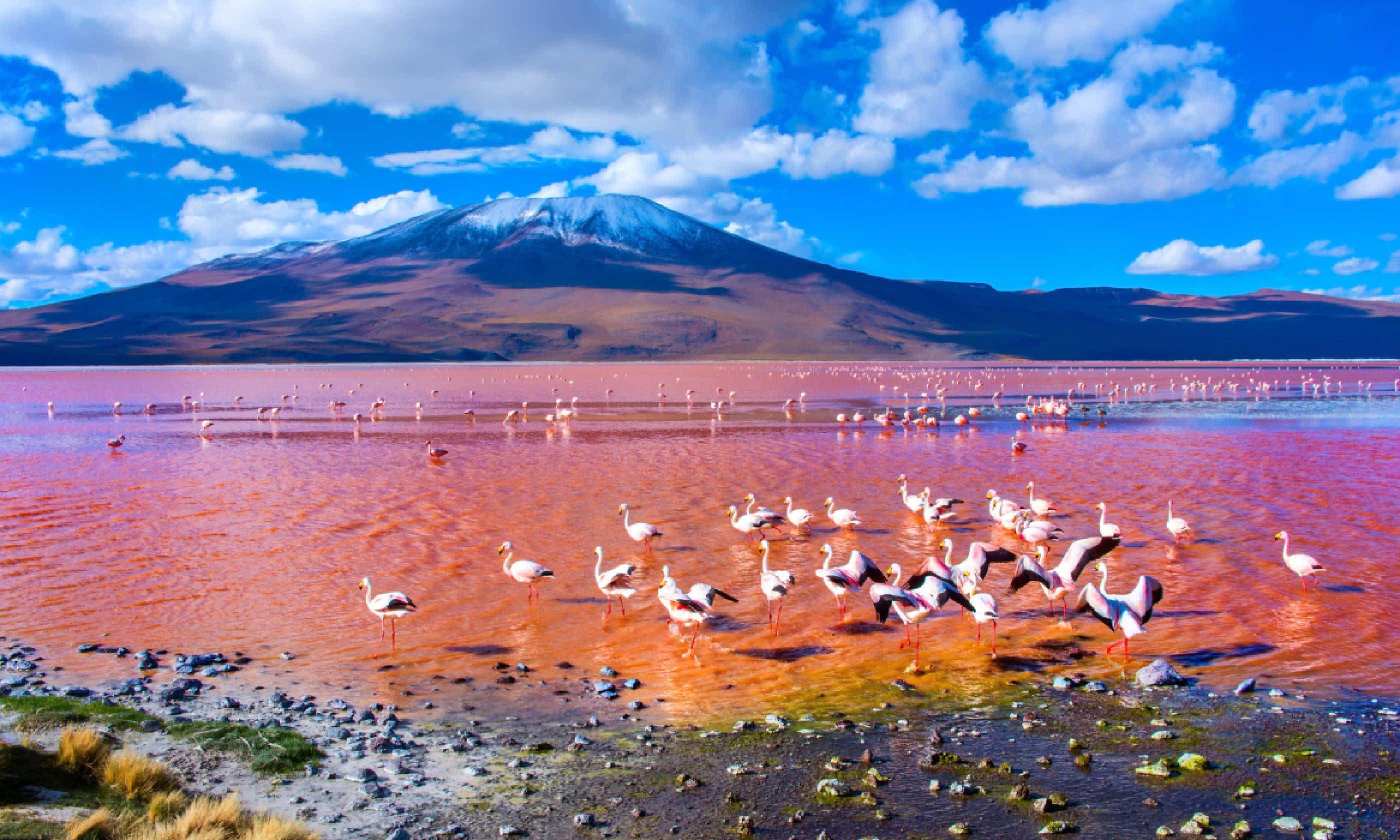 Flamingos in Laguna Colorada (Shutterstock)