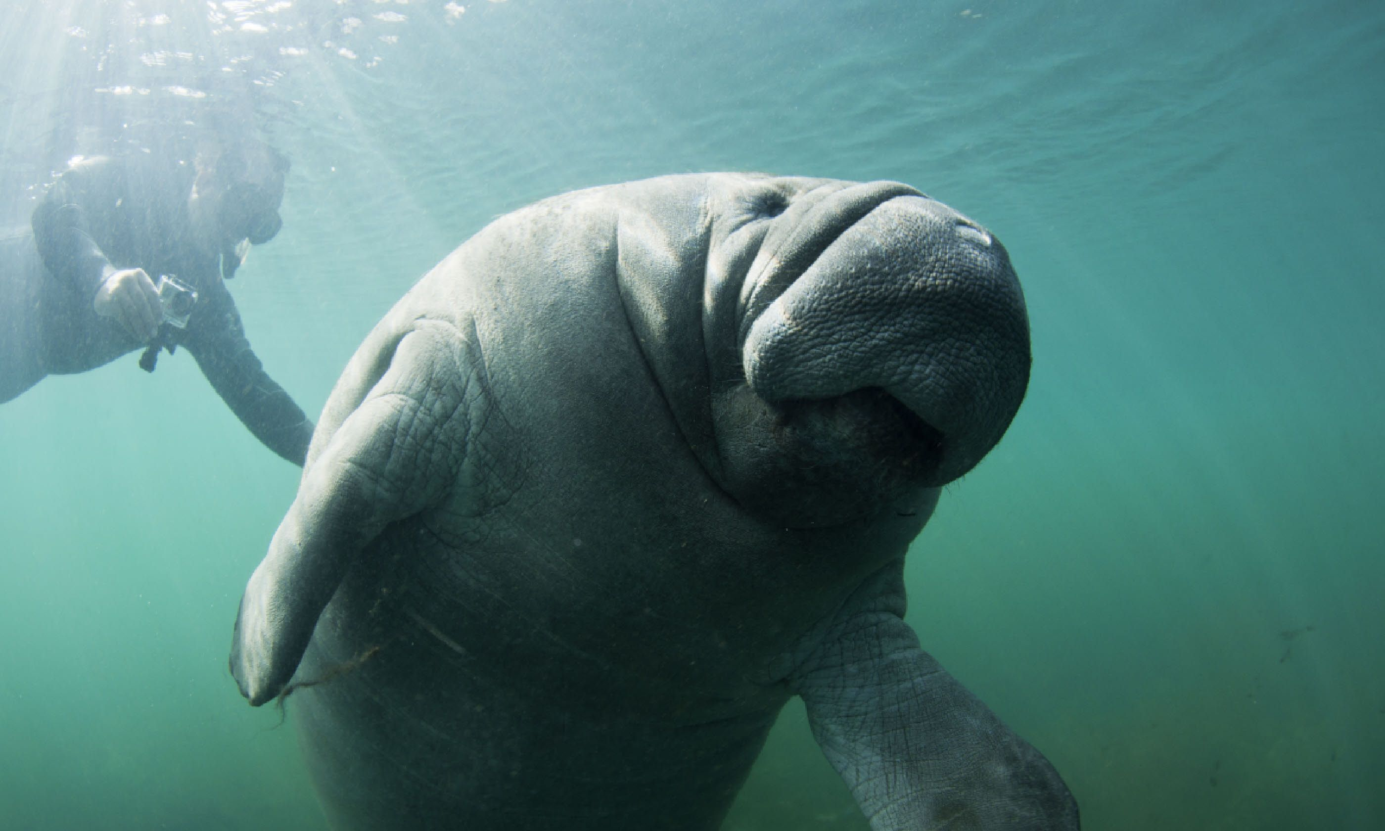 Manatee, Florida (Shutterstock)