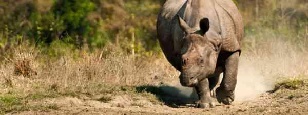 Rhino, Kaziranga National Park (Shutterstock)