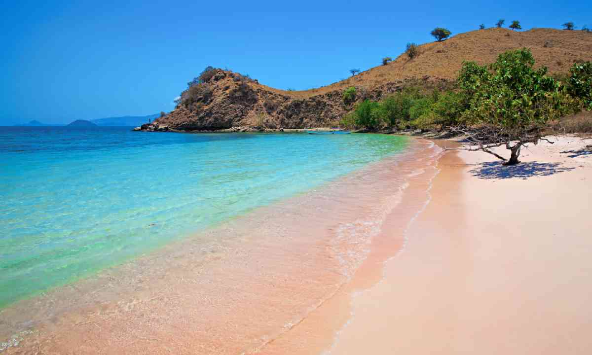 Pink Beach in Komodo National Park (Shutterstock)