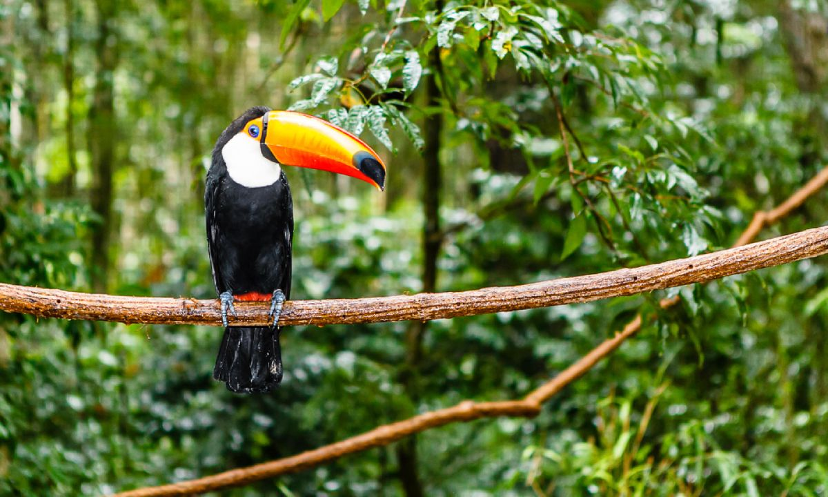 Fun Facts About The Amazon Rainforest For Kids
