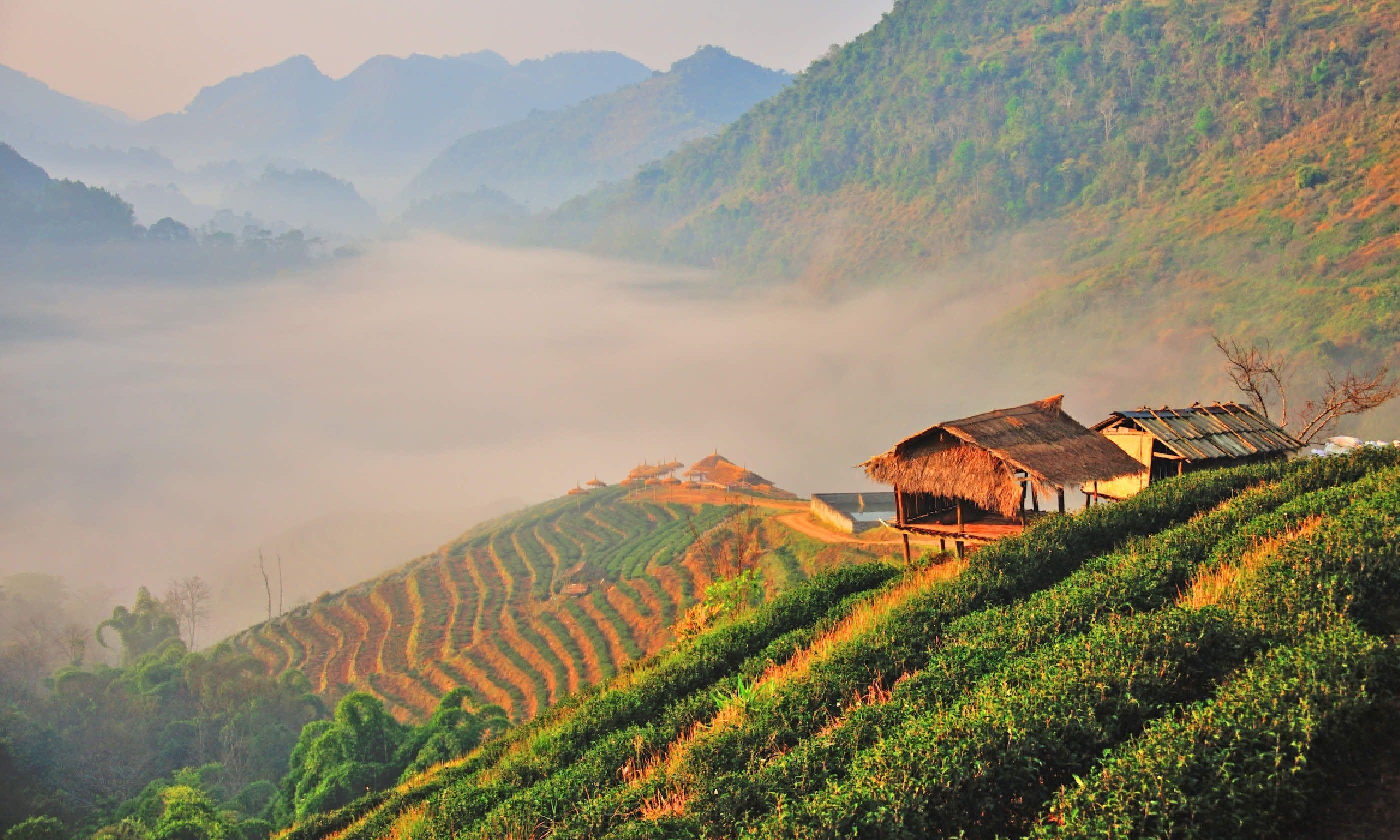 Tea plantation hut in Chiang Mai, Thailand (Shutterstock)