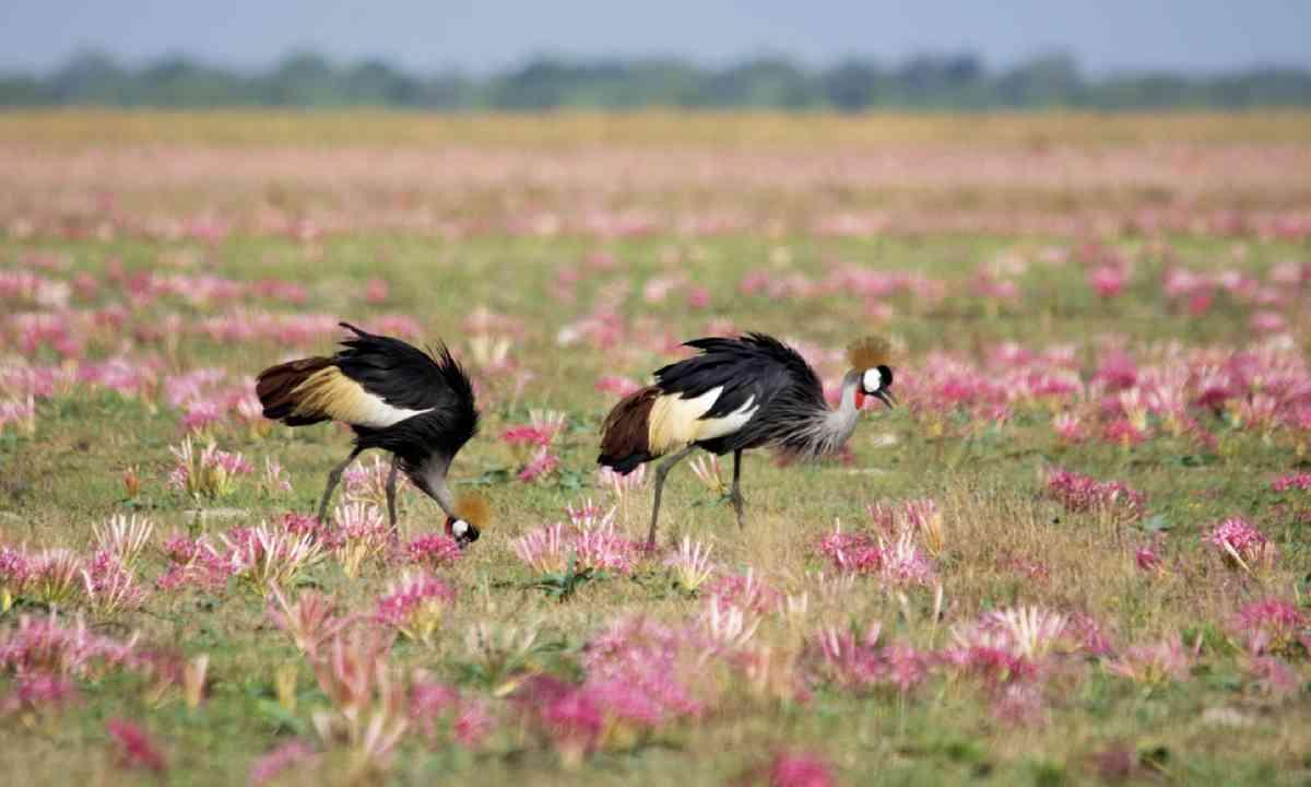 Liuwa Plains National Park (Dreamstime)